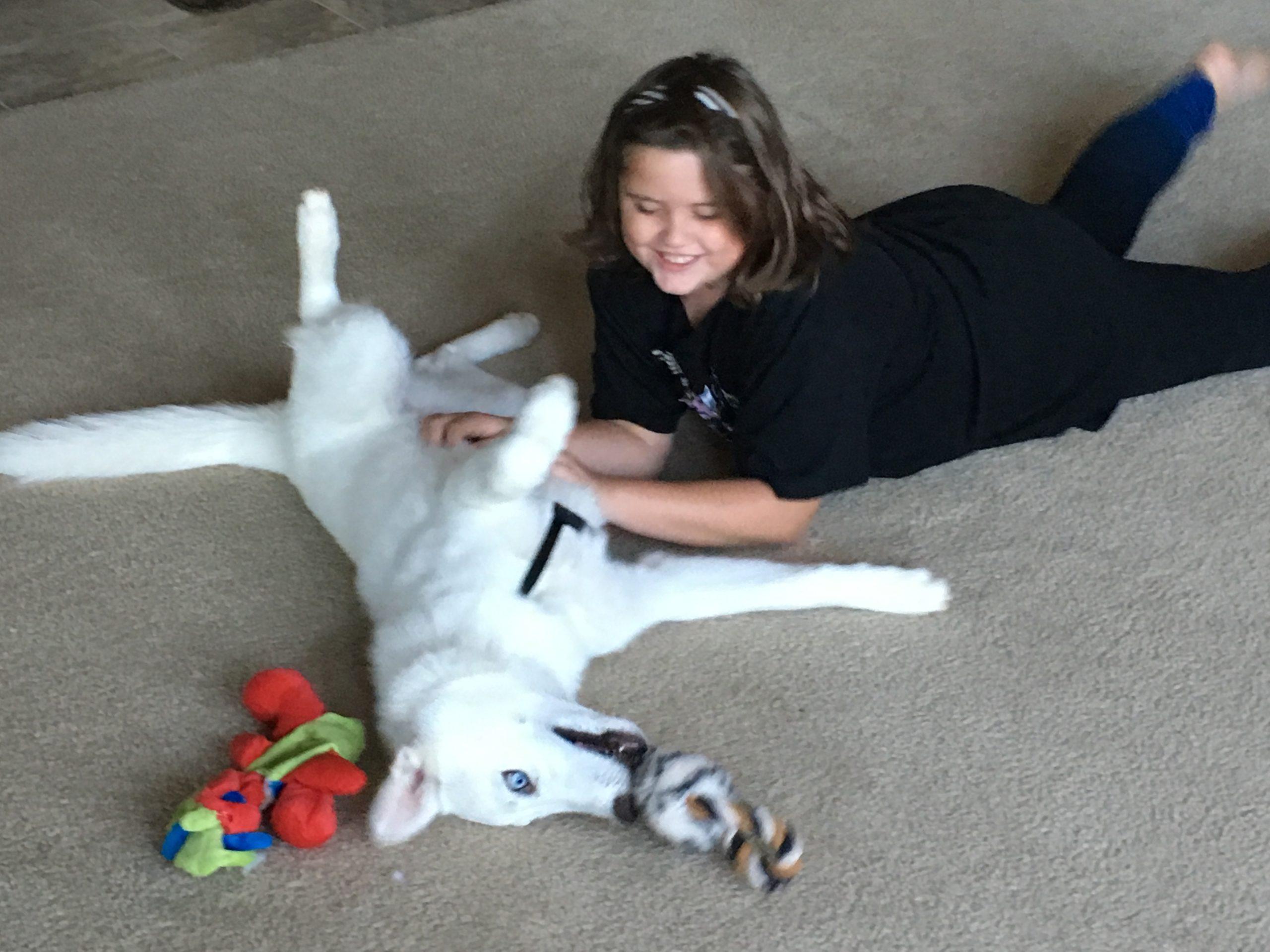 Family dog Trainer